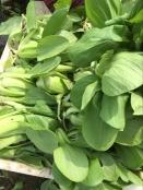 基地绿色蔬菜